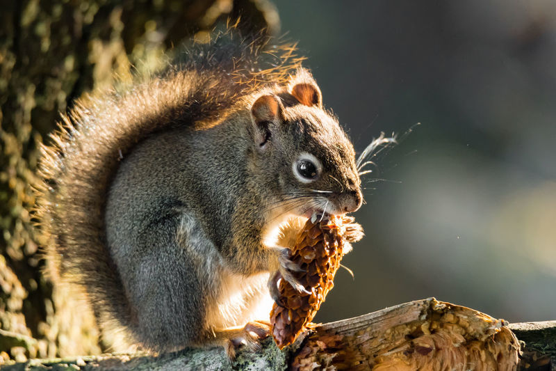 Close-up of squirrel eating tree