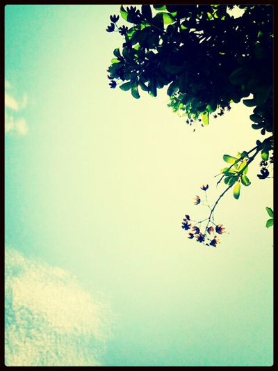 just beautiful! Nature Lover Outside♥ Pretty