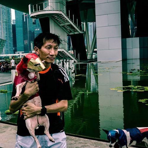 Ironman Dog Dogsofinstagram Marinabaysands Wednesday Sonyrx100iv Lightroom Singapore ASIA