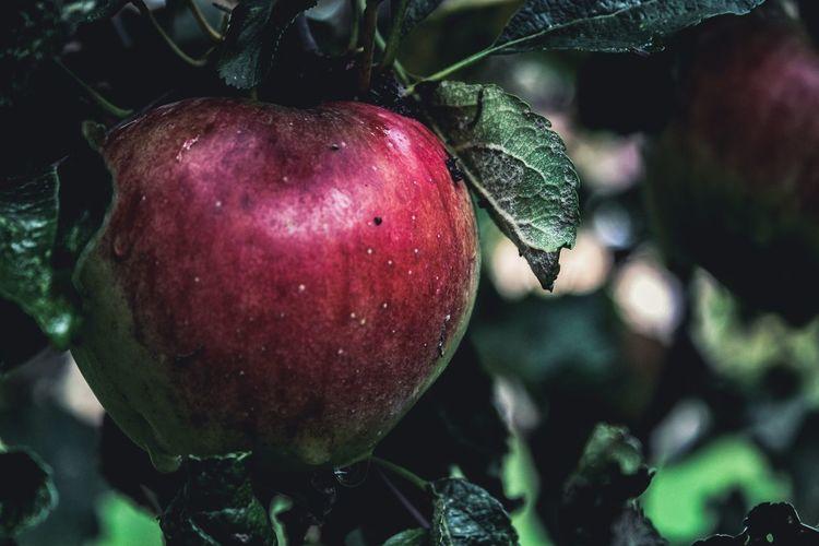 Apple, October
