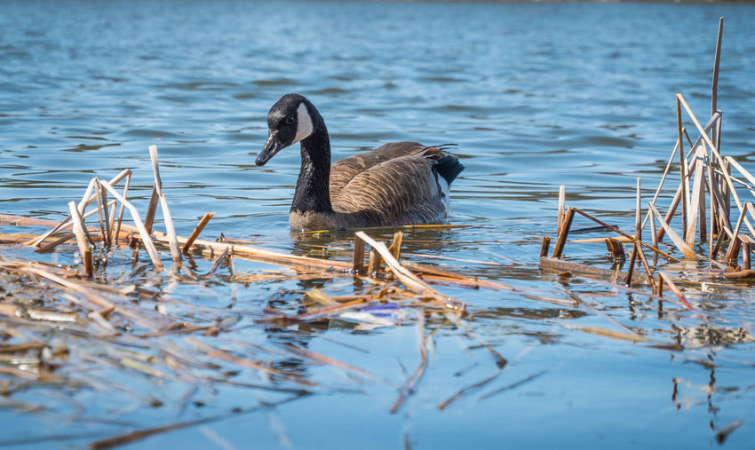 Natural Wildlife Photography Birds Day Nature No People Outdoors Wildlife