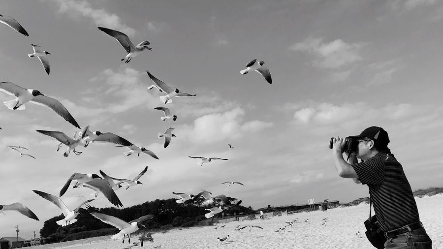 Low angle view of man photographing birds flying at beach