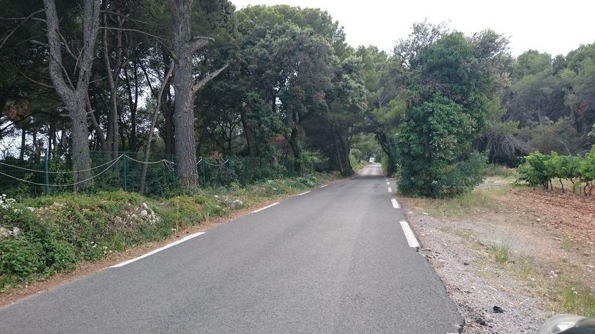Tree tunel
