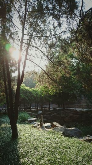 Tree Nature Growth Outdoors Sunlight Tranquility Sunset Scenics Sky Day Beijing, China Chinese Garden Miles Away