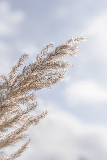 Close-up of snow on plant against sky