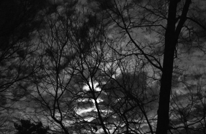 EyeEmNewHere Tree Low Angle View No People Nature Tranquility Silhouette Sky Outdoors Beauty In Nature