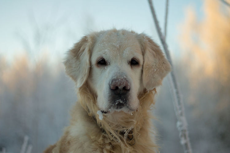 Animal Themes Close-up Cold Temperature Day Dog Domestic Animals Mammal Nature No People One Animal Outdoors Pets Portrait Winter Pet Portraits