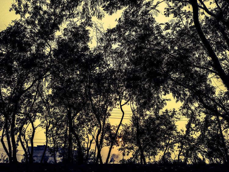 Artistic evening Sunset Backgrounds No People Full Frame Beautiful Pakistan پاکستان Phone Photography Huawei Mate7 Outdoors Mobilephotography غروب_آفتاب غروب الشمس Tree Evening View خوبصورت HuaweiMate7 Forest Evening Photography Sunset_collection
