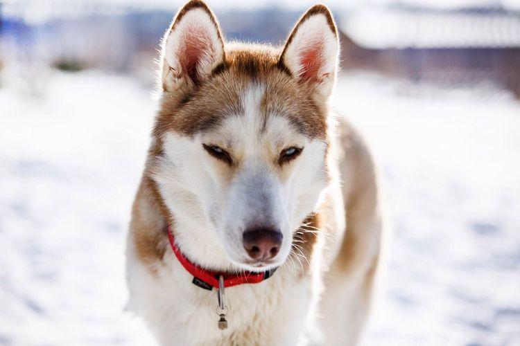 Portrait of dog on snow field