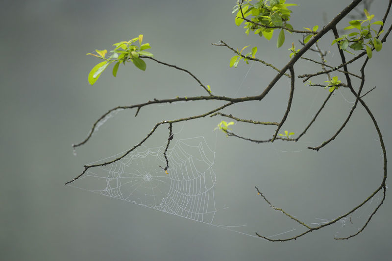 Close-up of spider web on branch against sky