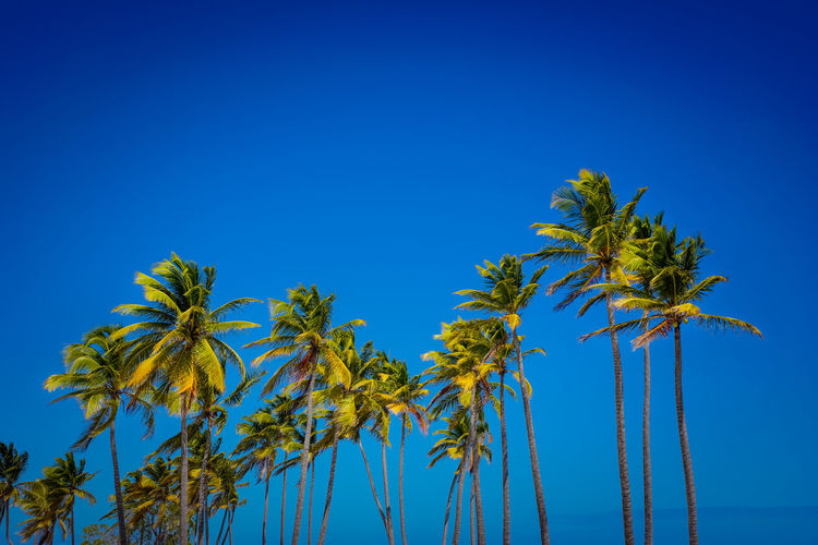 A Modicum of measure Beauty In Nature Blue Clear Sky Day Green Color Growth Low Angle View Nature No People Outdoors Palm Tree Scenics Sky Tree