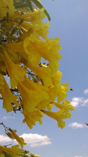 Caibrera Yellow Flower Flowerporn EyeEm Flower Color Portrait Flowers Sertão Flores