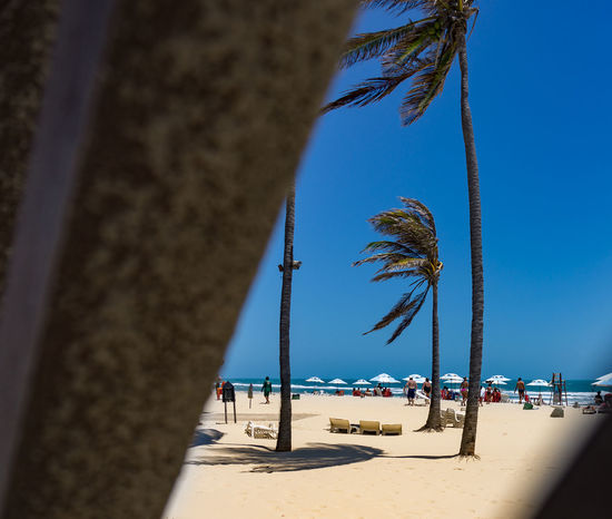 Fortaleza Architecture Beach Beauty In Nature Blue Built Structure Clear Sky Day Nature No People Outdoors Palm Tree Sand Scenics Sea Sky Tree Tree Trunk Water