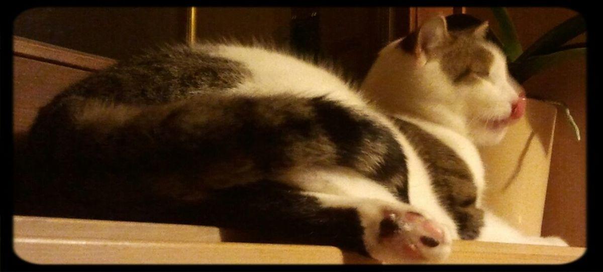 Cat Pet My Cat My Pet My Cat Gizmo!:) Gizmo EyeEm Nature Lover