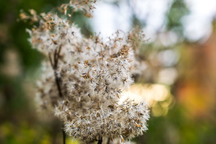 Close-up of white flowers blooming during autumn