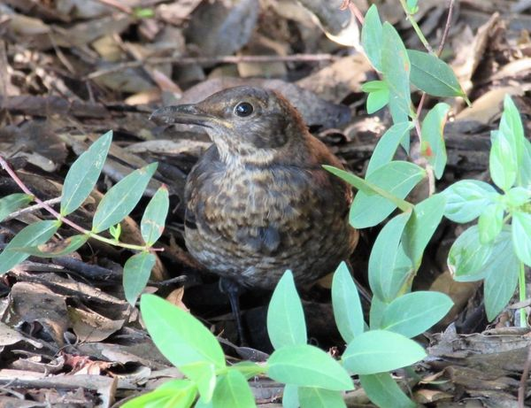 Lovely Bird Tranquil Nature Scene Bird Portrait Leaf Looking At Camera Close-up Plant Growing