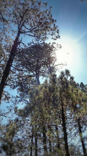 árboles Tree