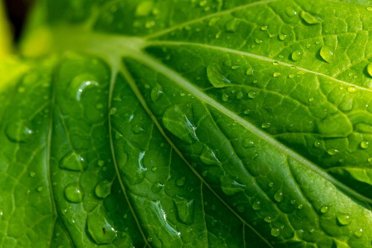 Drop Leaf Green