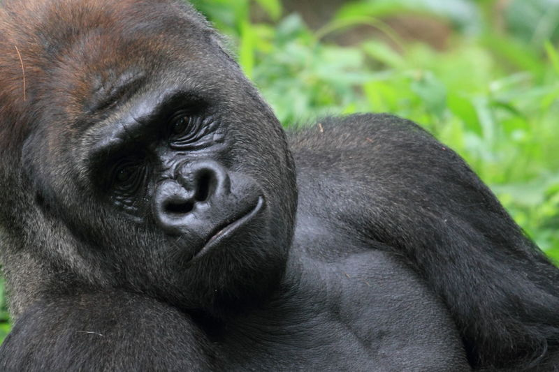 Portrait of black eye at zoo