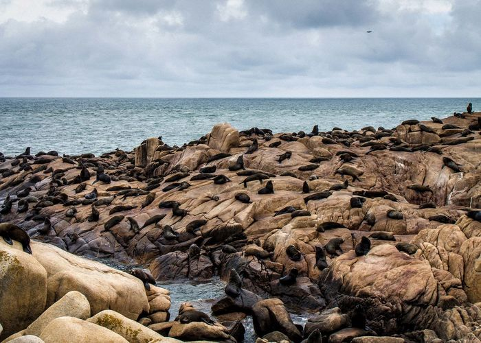 Seals on rocky shore against cloudy sky