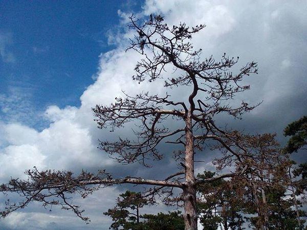 Fa Tree Agak Bough Felhő Felhők EG Sky Skyphotography Skyphotographer Skyphotos Clouds CloudPhotography Naturelovers Naturephotos Nature Naturephotography Naturephotographer Természetfotók Természetfoto Természet Magyarfoto Magyarország Magyarfotósok Nofilter nofilterneeded