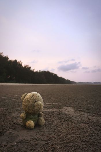 Abandoned teddy bear at the beach in the evening Clean Background Sad & Lonely Sadness Sky Abandoned Cold Empty Emptiness Beach Sand Sandy Beach Evening Evening Sky Teddybear Tree Sky Depression Discarded Obsolete Worn Out Shore