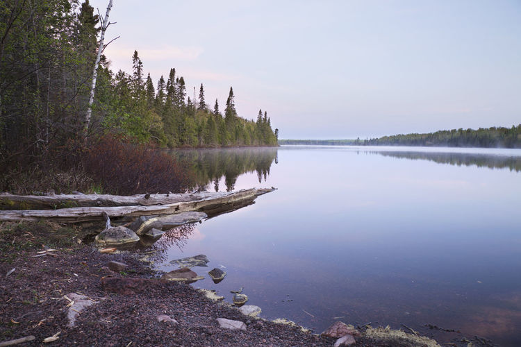 A northern Minnesota lake on a calm peaceful morning Lake Minnesota North Calm Peaceful Tranquil Morning Dawn Landscape Nature Beauty In Nature Trees Logs Shore Pine Water Reflection Early Clouds Sky Rocks Bushes Birch Color Image Photography USA Cascade Lake Scenic Tranquility Tranquil Scene Scenics - Nature Outdoors