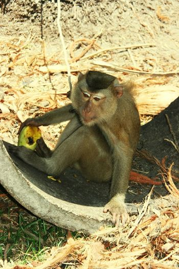 Monkey Sitting Animals In The Wild One Animal Sitting Day Nature No People
