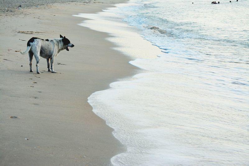Water Pets Sea