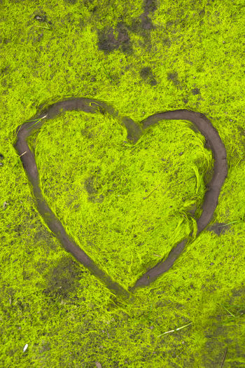 High angle view of heart shape made of plants