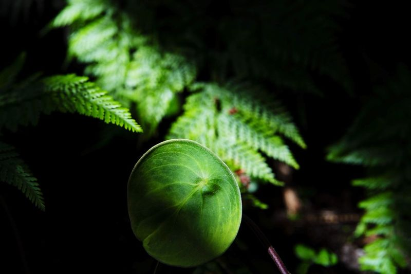 natural life Nikon Nikonphotography Nikon D4 Green Luminosity Still Life Natural Beauty Natural Nature Feuilles Heart Tree Fruit Black Background Leaf Close-up Green Color Plant