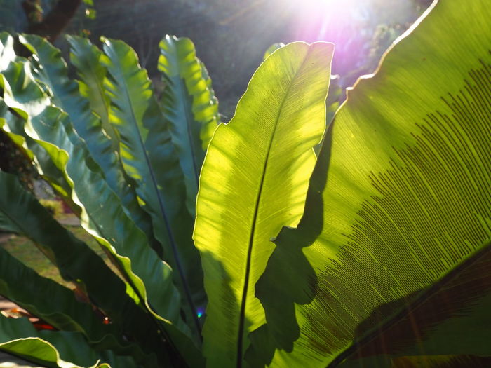 Close-up of leaves on plant