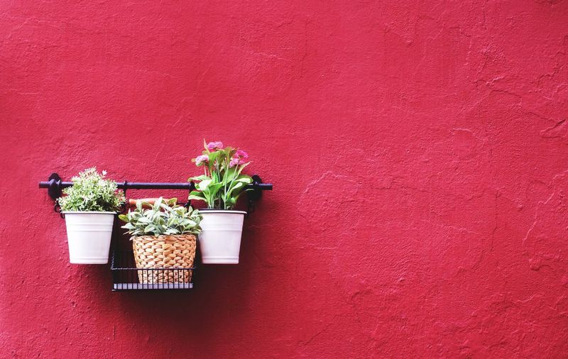 Potted Plants Against Red Wall