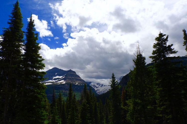 One of the many amazing views from Glacier National Park in Montana. National Park Montanamoment Montana Glacier National Park Glacier Tree Plant Cloud - Sky Sky Beauty In Nature Scenics - Nature Growth Tranquil Scene Mountain Low Angle View Forest Tranquility Nature Non-urban Scene Landscape Outdoors Green Color Land The Great Outdoors - 2018 EyeEm Awards