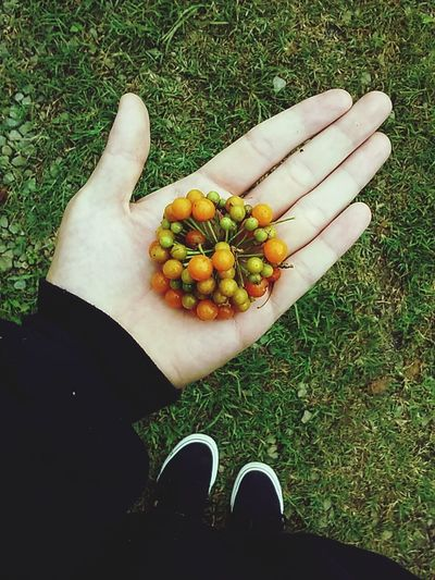 Low section of person holding fruit on field