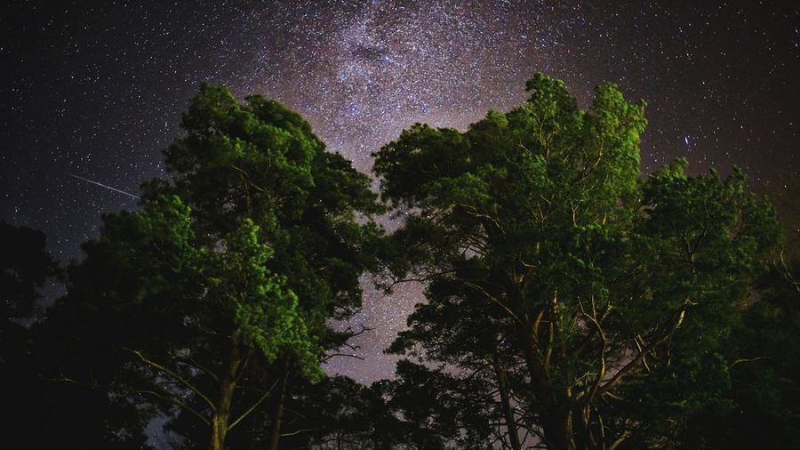 Star - Space Night Astronomy Space And Astronomy Tree Star Field Long Exposure Milky Way Sky Nature Nightsky Outdoors ILCE7M2 Countryside No People Forest Tranquil Scene Night In The Forest Stars Through The Trees
