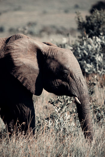 Side view of elephant on land