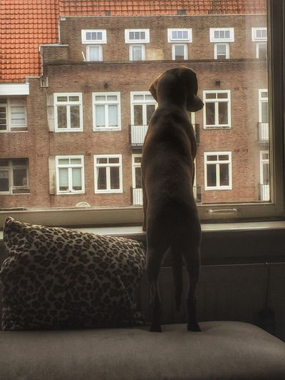 Donna ❤️ Hello World Iloveanimals Dogs Taking Photos IPhoneography Amsterdam Lookingout