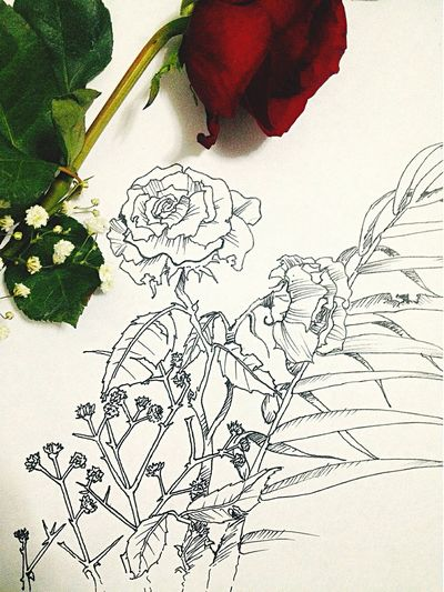 Flowers Roses Drawing Art Black And White My Drawing
