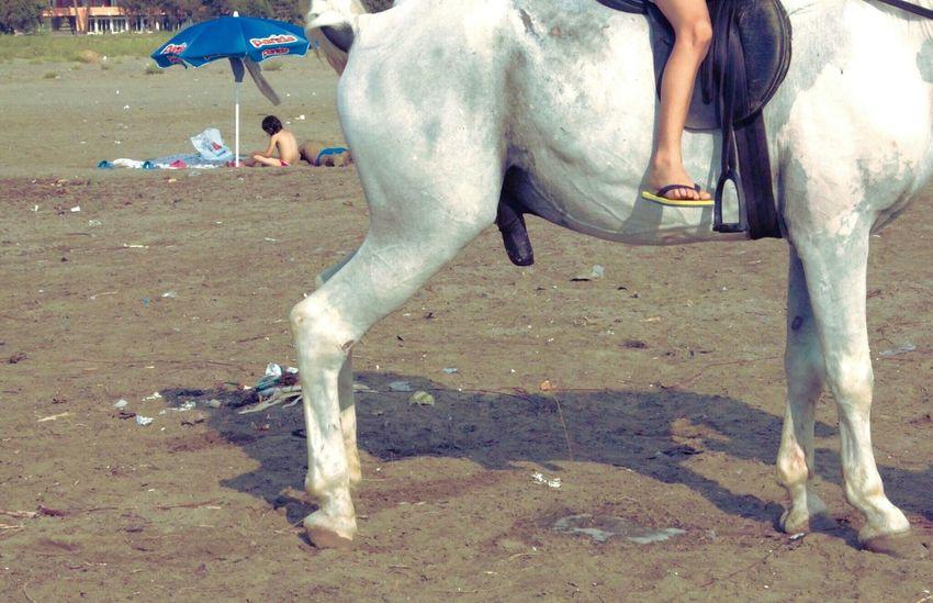 Horse Cavallo Albania Shqiperia Beach Spiaggia Plazh Sea Mare Deti Divjake Sand Sabbia