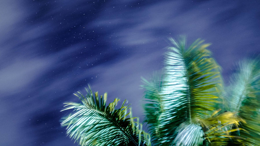Astronomy Astrophotography Beauty In Nature Blur Cloudy Green Color Leaf Low Angle View Motion Nature Night Outdoors Palm Tree Scenics Sky Stars Tranquility Tree Winter