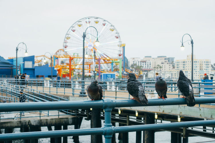 Pigeons Perching On Railing By Amusement Park Against Clear Sky
