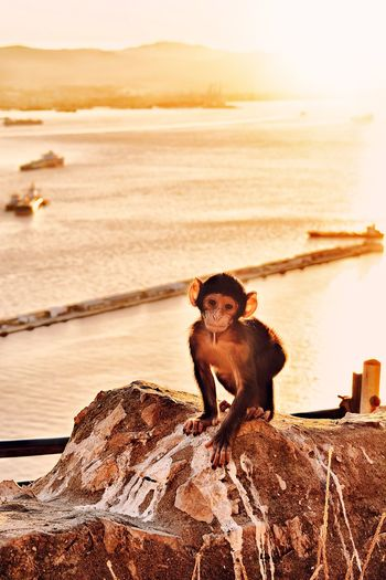 Portrait of monkey sitting on rock