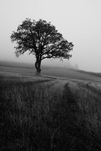 Tree Black And White Fog Landscape Tranquil Scene Nature Outdoors Isolated Grass Beauty In Nature No People Non-urban Scene Plant Field Land Tranquility First Eyeem Photo EyeEmNewHere