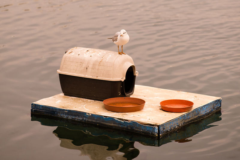 Seagull Perching On Container Over Raft In Sea