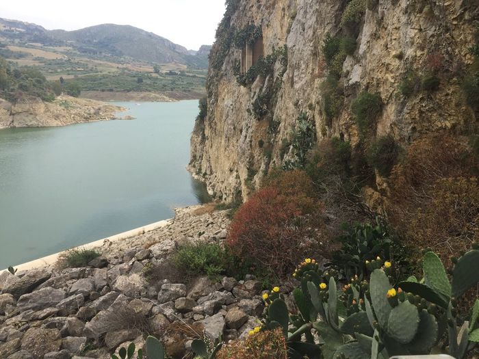 Water Plant Nature Beauty In Nature Day No People Tranquility Tree Tranquil Scene Rock Solid Scenics - Nature Close-up Outdoors Growth Mountain Sunlight Lake