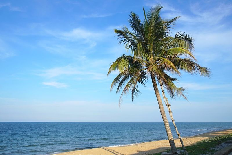 Coconut tree for nira drink in Kelulut, Terengganu Outdoor No People Land Nature Blue Sky Kelulut Terengganu Coconut Tree Nira Tuak Kelapa Tree Water Sea Palm Tree Beach Sky Horizon Over Water Landscape Cloud - Sky Seascape Single Tree