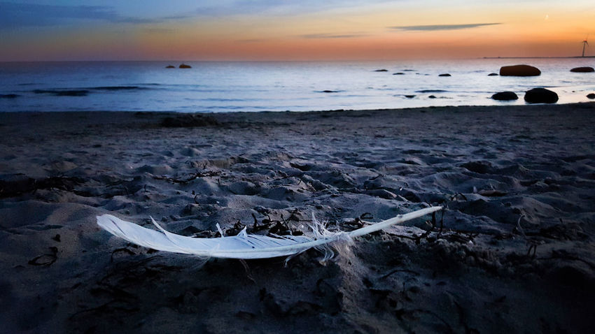 Sunset_collection Beach Beauty In Nature Feather  Feather Collection Feather_perfection Horizon Over Water Sand Sky Sunsse Water