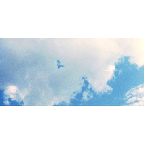 Sky Bird Clouds Imaginary Bir bulut kuş olup uçabilir.