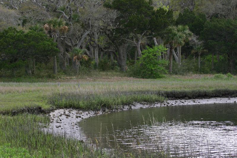 Swamp Timucuan Preserve Tree Coastal Day Florida Nature Florida Outdoor Grass Intracoastal Intracoastal Waterway Nature No People Outdoors Shoreline Shorelines Tree Water